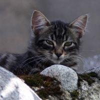 Titel: Katze